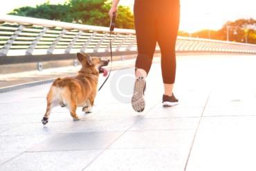 Excericse, Perform, Rest – Your Pup's Schedule